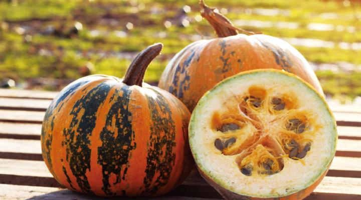 栄養価の高いペポかぼちゃの種